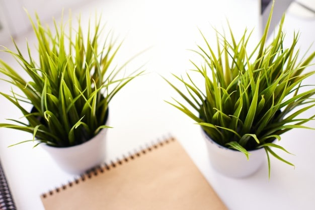 zielone rośliny w doniczkach i notatnik