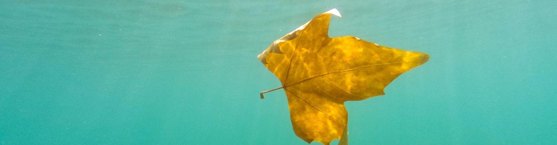 żółty liść w wodzie