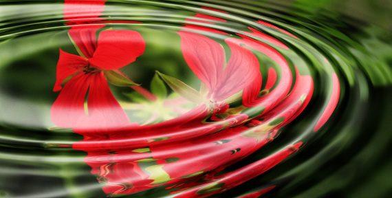 kwiat w wodzie